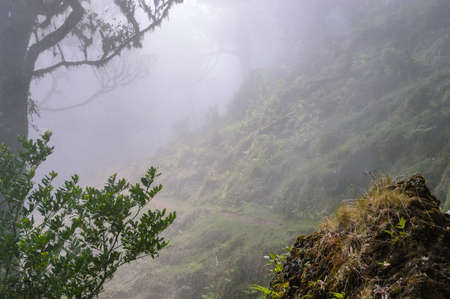 Fog over the a path through the forest, Madeira