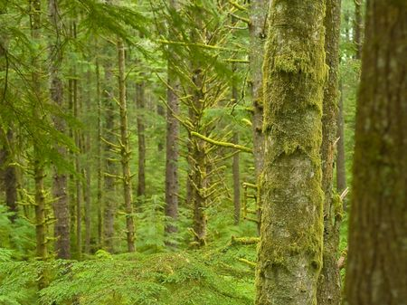 Photos of the rain forest at Ecola State Park on the Oregon Coast. Stock Photo - 4292847