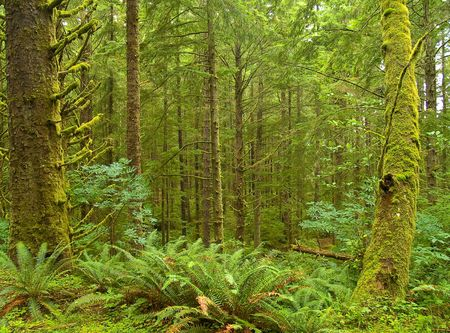 Photos of the rain forest at Ecola State Park on the Oregon Coast. Stock Photo - 4292853