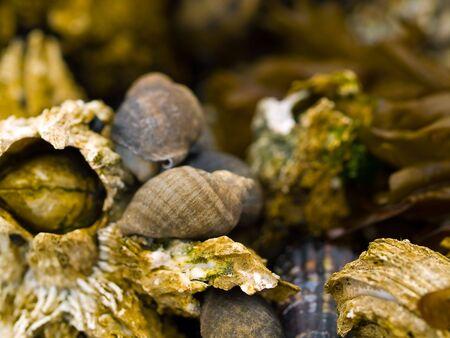 closeups: Various macro closeups of shells taken at the tide pools at Canon Beach, Oregon.