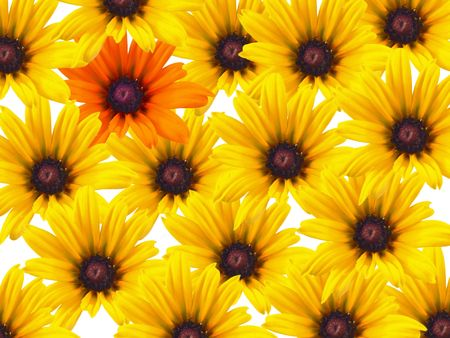 repeated: Yellow daisy flowers repeated as a background with a single orange bloom. Stock Photo