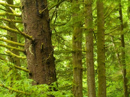 Photos of the rain forest at Ecola State Park on the Oregon Coast. Stock Photo - 4769591
