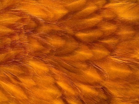 Orange chicken feather background with a soft texture.