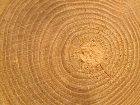 Wood Center MACRO ringen en details weer geven Stockfoto