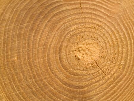 wood cut: Wood Center MACRO showing RIngs and Details Stock Photo