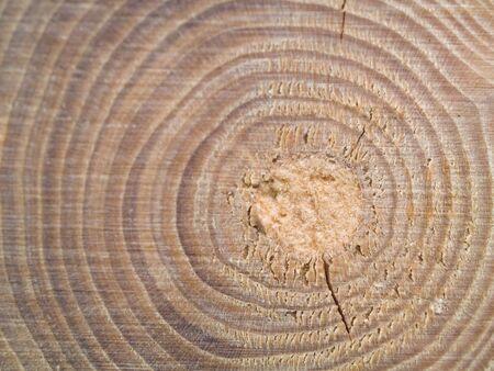 RIngs와 세부 사항을 보여주는 Wood Center MACRO