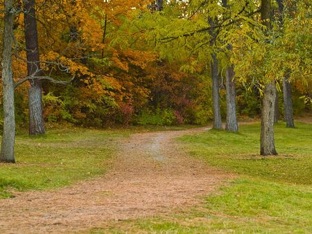 Country Forest Foot Path in an Autumn Park photo