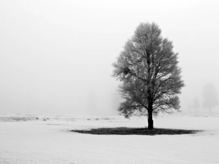 Winter Trees Covered in Frost on a Foggy Morning Stock Photo - 7574919