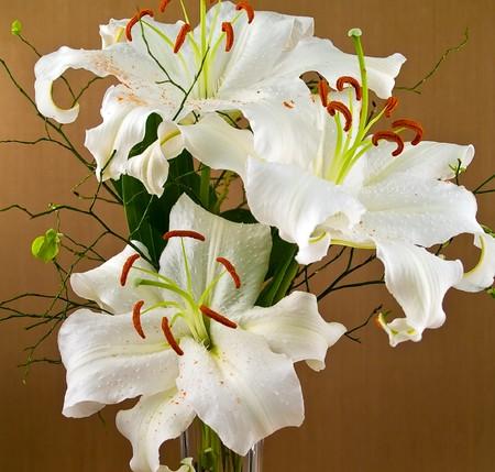 Detalle de lirios blancos de Casablanca con detalles de la flor  Foto de archivo - 7574904