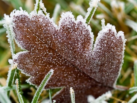 Frost Covered Leaf on Frozen Grass on an Autumn Morning