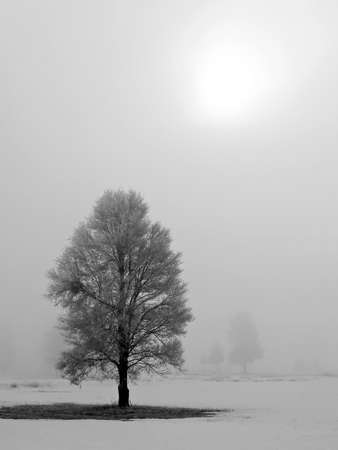 Winter Trees Covered in Frost on a Foggy Morning Stock Photo - 7574905
