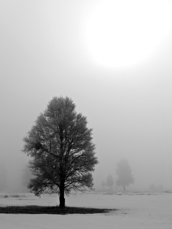 Winter Trees Covered in Frost on a Foggy Morning Stock Photo - 7574900