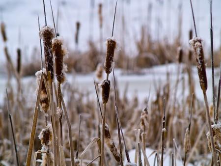 Frozen Marsh Area on an Overcast Day Stock Photo - 8274934
