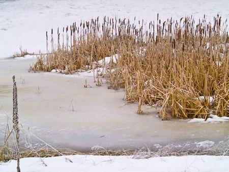 Frozen Marsh Area on an Overcast Day photo