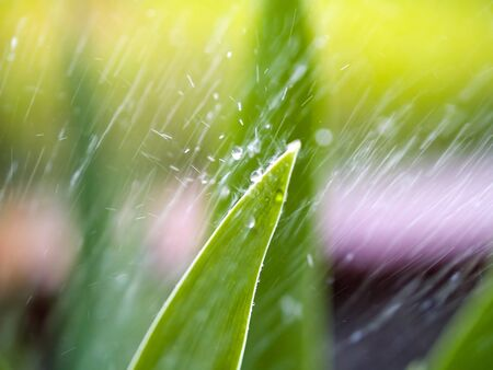 Closeup of Sprinkler Spraying on Leaves in a Garden photo