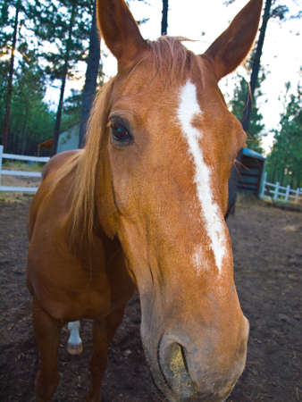 A Horse Portrait in the Evening Hour photo