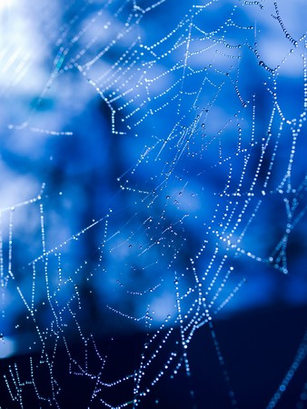 Spider Web Covered with Sparkling Dew Drops Stock Photo - 8275000