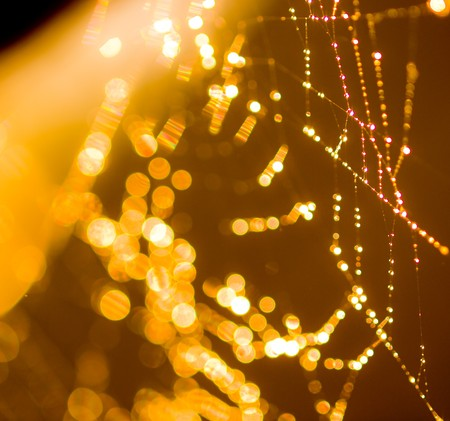Goldtone Spider Web Abstract with Sparkling Dew Drops Selective Focus photo
