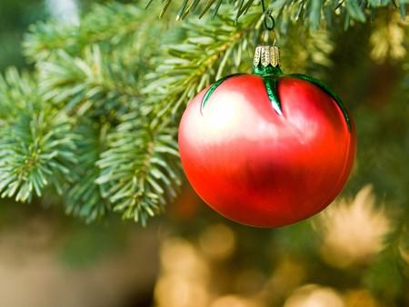 tomate de arbol: Ornamento de tomate de �rbol de Navidad de suspensi�n desde el exterior de un rama de hoja perenne Foto de archivo