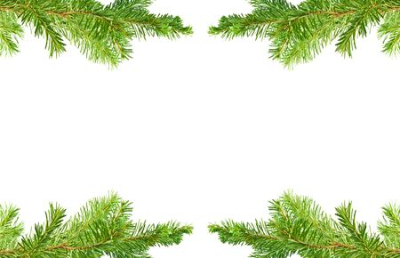 greeting season: Evergreen Tree Branch Frame Isolated on White Background