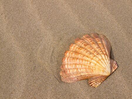 Scallop Shell on a Wind Swept Sandy Beach Stockfoto