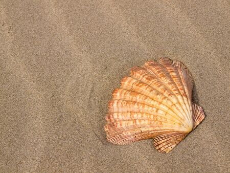 Scallop Shell on a Wind Swept Sandy Beach Imagens