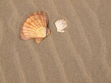 Scallop Shell on a Wind Swept Sandy Beach photo