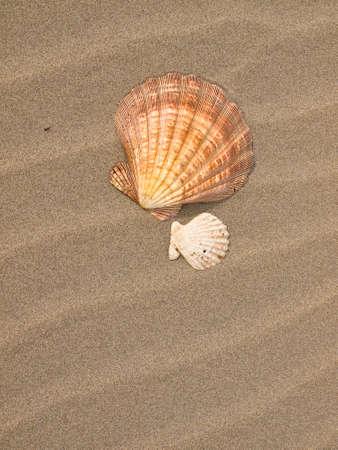 風にホタテ貝殻を総なめにした砂浜 写真素材