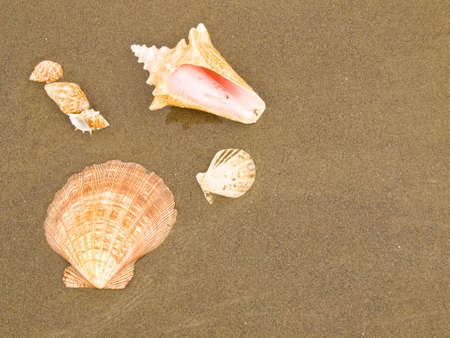 Scallop and Conch Shells on a Wet Sandy Beach photo