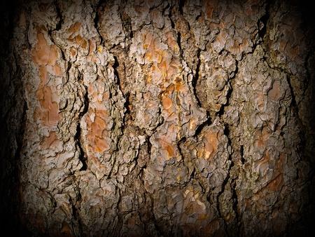Evergreen Tree Bark Texture with Dark Edge