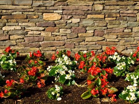 Tuin met bloemen in de buurt van een muur van ruwe steen. Stockfoto