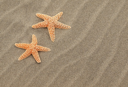 Two Starfish on the Beach with Windswept Sand Ripples Stock Photo - 10754559