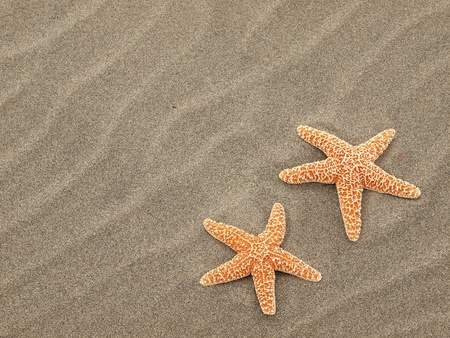 Two Starfish on the Beach with Windswept Sand Ripples Stock Photo - 10754560