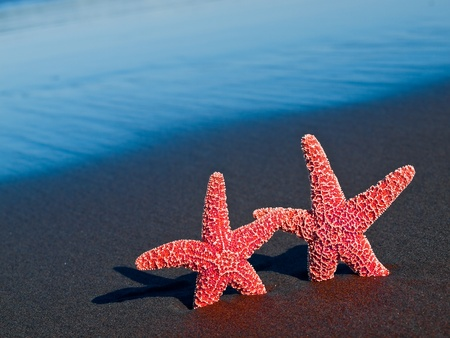 Two Red Starfish on the Beach with Ocean Waves in the Background