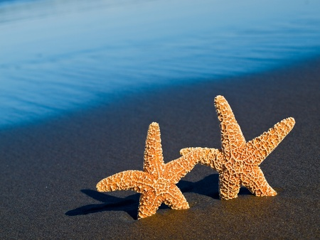 Two Starfish on the Beach with Ocean Waves in the Background photo