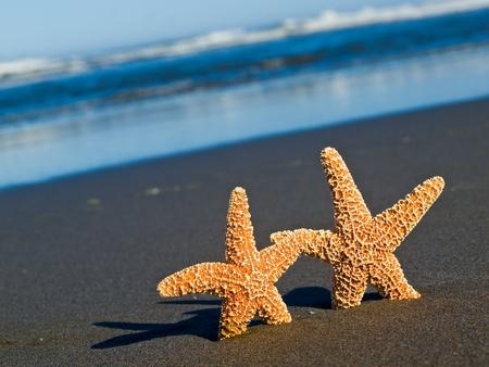 Twee Zeester op het strand met Oceaan golven op de achtergrond Stockfoto