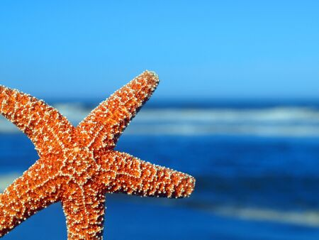 A Single Starfish Peeking from the Edge with Ocean Waves in the Background Фото со стока