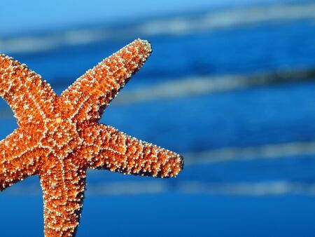 A Single Starfish Peeking from the Edge with Ocean Waves in the Background Stock Photo - 10754487