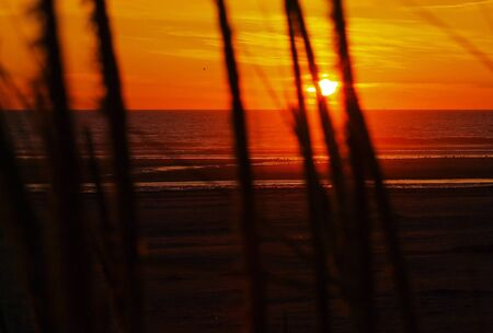 hirtshals: Golden Sunset at the Beach with Tall Grass