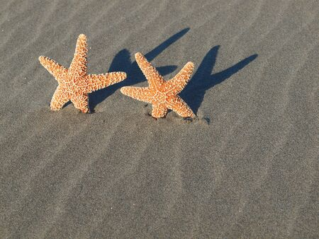 Two Starfish with Shadows on the Beach with Windswept Sand Ripples  photo