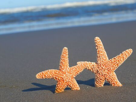 Two Starfish with Shadows on the Beach with Ocean Waves in the Background  photo