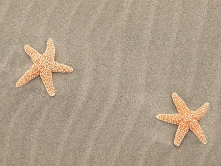 Deux �toiles de mer sur la plage avec balay�s par les vents de sable Ripples