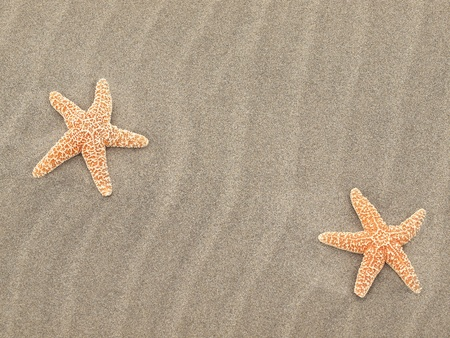 Two Starfish on the Beach with Windswept Sand Ripples  Standard-Bild