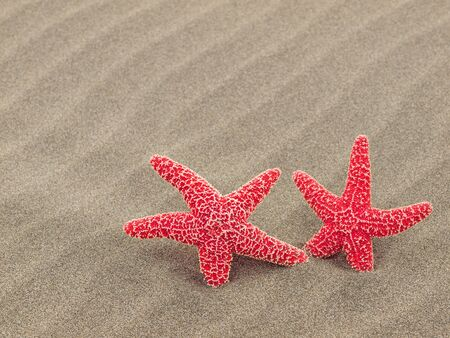 Two Red Starfish on the Beach with Windswept Sand Ripples photo
