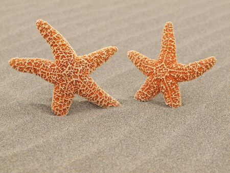 Two Starfish on the Beach with Windswept Sand Ripples Stock Photo - 12675314