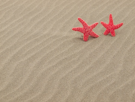 Two Red Starfish on the Beach with Windswept Sand Ripples Stock Photo - 12675329