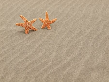 Two Starfish on the Beach with Windswept Sand Ripples  Stock Photo - 12675322