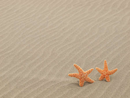 Two Starfish on the Beach with Windswept Sand Ripples  Stock Photo - 12675315
