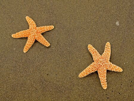 Two Starfish on a Wet Sandy Beach photo