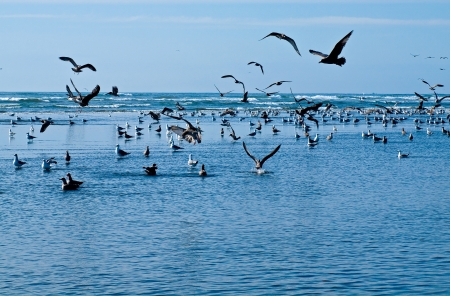 A Variety of Seabirds at the Seashore photo